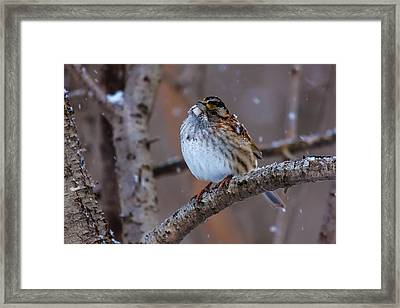 Winter Curiosity   Framed Print by James Marvin Phelps