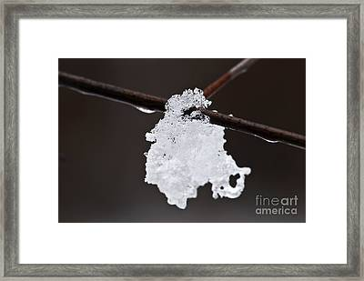Winter Detail Framed Print by Elena Elisseeva