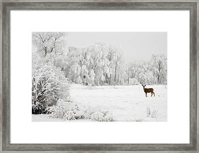 Winter Doe Framed Print by Mary Jo Allen