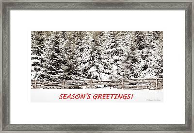 Winter Evergreens Greeting Card Framed Print by Barbara McMahon