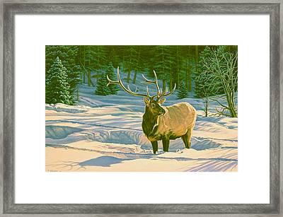 Winter Forage - Elk Framed Print by Paul Krapf