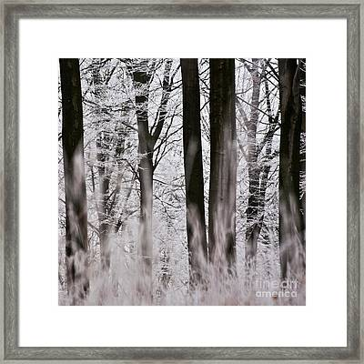 Winter Forest 1 Framed Print by Heiko Koehrer-Wagner