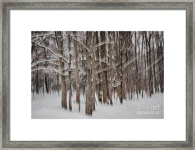 Winter Forest Abstract II Framed Print by Elena Elisseeva