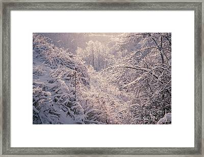 Winter Forest After Ice Storm Framed Print by Elena Elisseeva