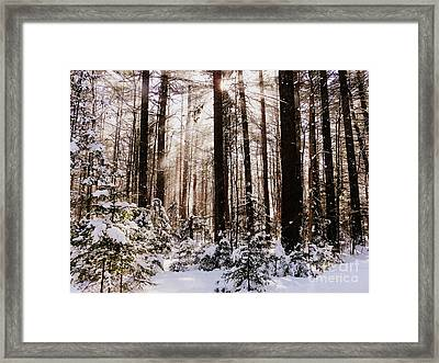 Winter Forest Framed Print by Avis  Noelle