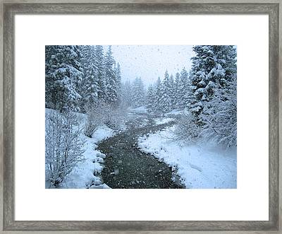 Winter Forest Framed Print by David Rucker
