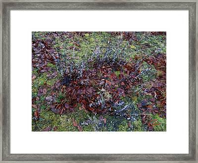 Winter Frost Peace Nature Denmark Framed Print by Colette V Hera  Guggenheim