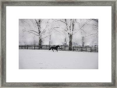 Winter Glory Framed Print by Bill Cannon