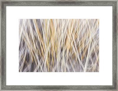 Winter Grass Abstract Framed Print by Elena Elisseeva