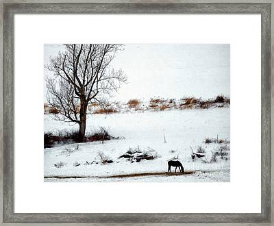 Winter Horse Pasture 2 Framed Print by Janine Riley