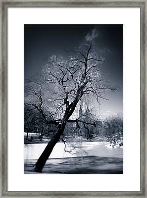 Winter In Central Park Framed Print by Dave Bowman