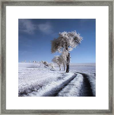 Winter In Summer Framed Print by Piotr Krol (bax)