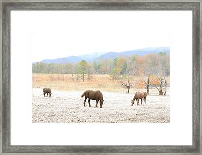 Winter In The Cove Framed Print by Gene Smith