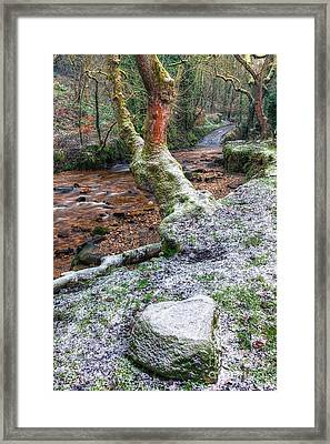 Winter In The Woods Framed Print by Adrian Evans