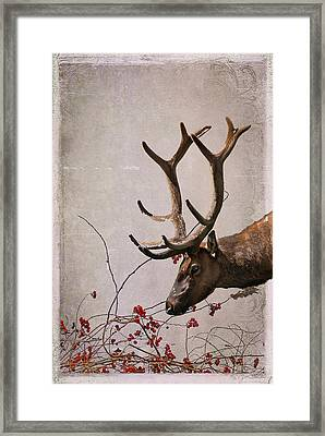 Winter King Framed Print by Julie Magers Soulen