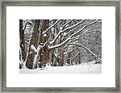 Winter Landscape Framed Print by Elena Elisseeva