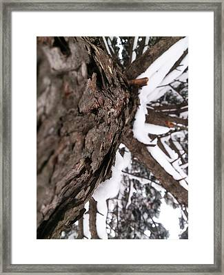 Winter Framed Print by Lucy D