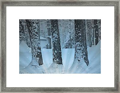 Winter Miracle Framed Print by Trish Tritz