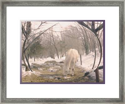 Winter Moments- With My Paso Fino Stallion Framed Print by Patricia Keller
