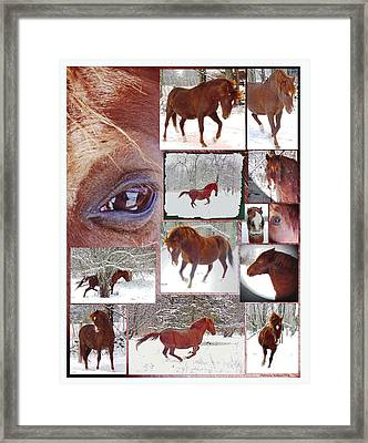 Winter Moments- With The Flashy Paso Fino Stallion Framed Print by Patricia Keller