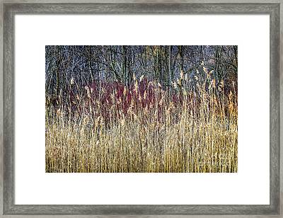 Winter Reeds And Forest Framed Print by Elena Elisseeva