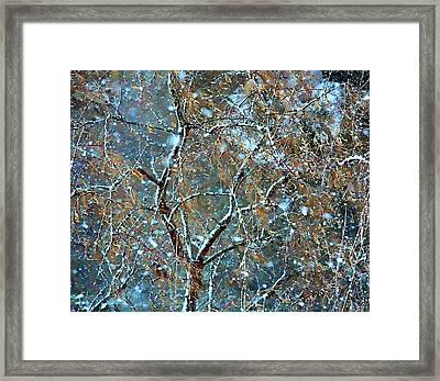Winter Robin Framed Print by Kathy Bassett