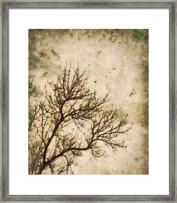 Winter Solitude Framed Print by Dan Sproul