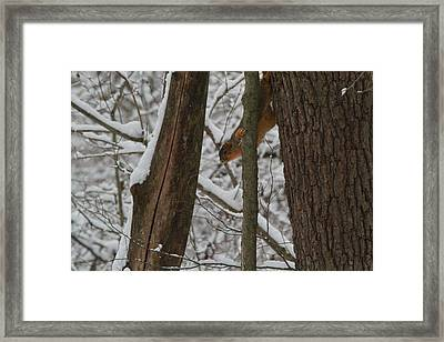 Winter Squirrel Framed Print by Dan Sproul