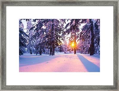 Winter Sunset Through Trees Framed Print by Priya Ghose