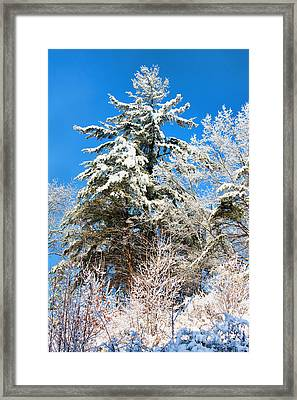 Winter Time Framed Print by Lena Auxier