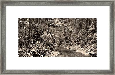 Winter Trail Framed Print by Phill Petrovic