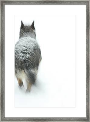 Winter Traveler Framed Print by Karol Livote