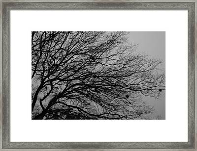 Winter Tree Framed Print by Kimberly Oegerle
