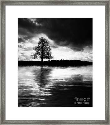 Winter Tree Light   Framed Print by Tim Gainey