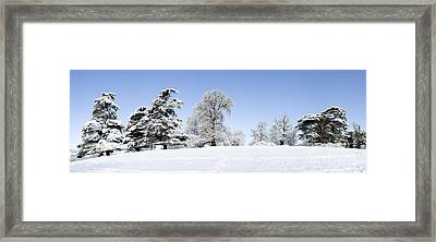 Winter Tree Line Framed Print by Tim Gainey