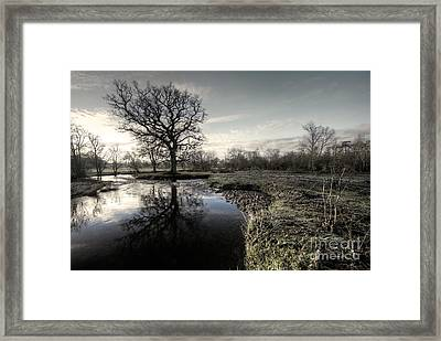 Winter Tree On The River Culm Framed Print by Rob Hawkins