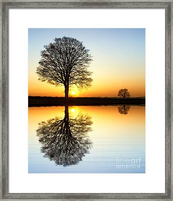Winter Tree Reflections Framed Print by Tim Gainey
