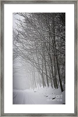 Winter Trees Along Snowy Road Framed Print by Elena Elisseeva