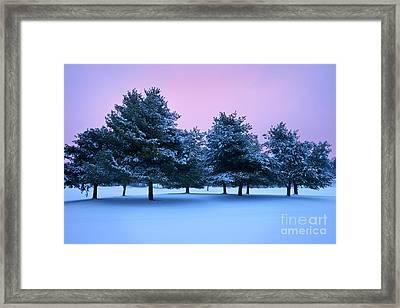 Winter Trees Framed Print by Brian Jannsen