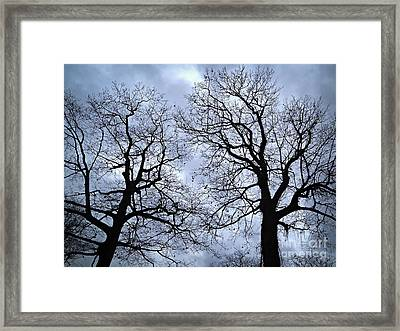 Winter Trees Framed Print by Elena Elisseeva