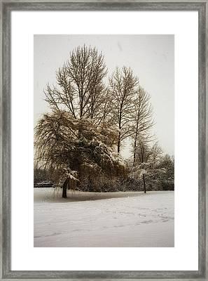 Winter Trees Framed Print by Eti Reid