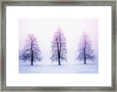 Winter Trees In Fog At Sunrise Framed Print by Elena Elisseeva