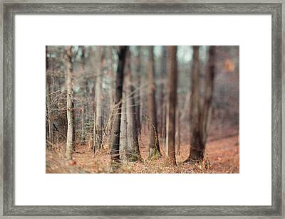 Winter Trees Framed Print by Kim Fearheiley