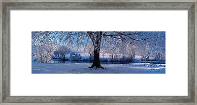 Winter Trees Perkshire Scotland Framed Print by Panoramic Images