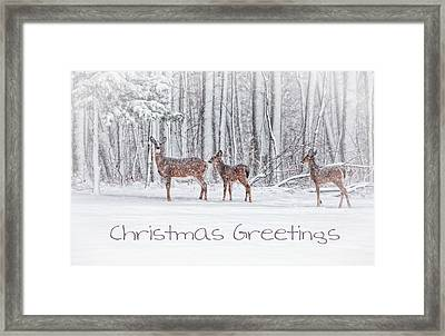 Winter Visits Card Framed Print by Karol Livote