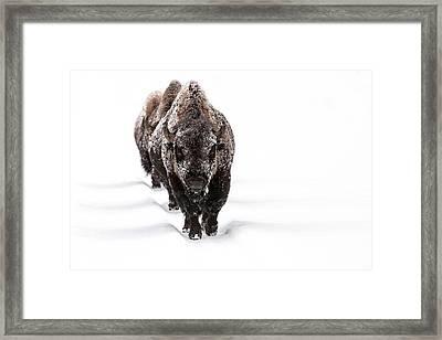 Winter Warriors Framed Print by Sandy Sisti