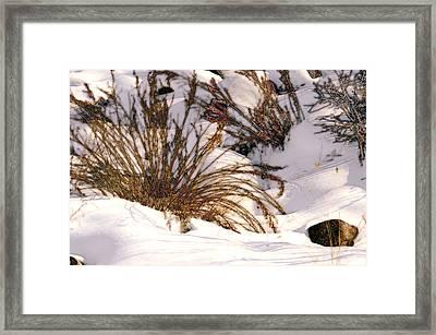 Winter Weeds Framed Print by Kae Cheatham