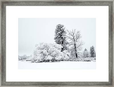 Winter White Framed Print by Mike  Dawson