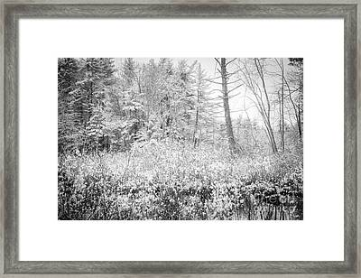 Winter Whites Framed Print by Sue OConnor