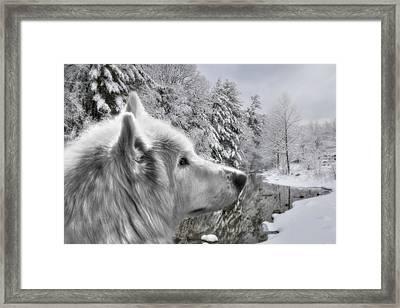 Winter Wolf Framed Print by Lori Deiter